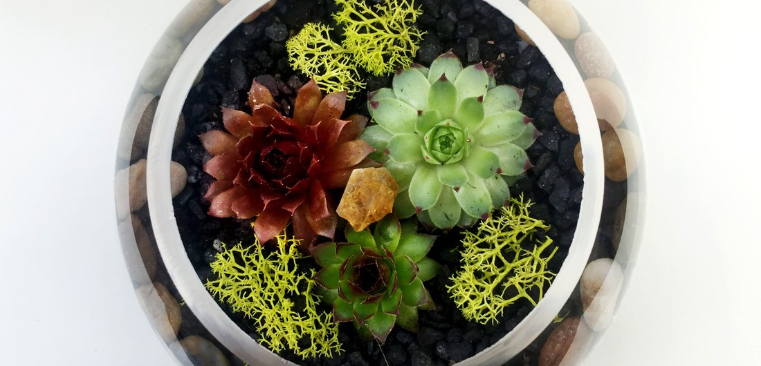 Glass Rose Bowl Succulent Terrarium With Citrine Quartz Crystal At