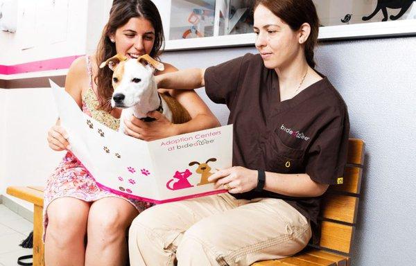 Dog Adoption Event Events Long Island City Partnership
